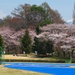 茅野スポーツ公園桜 (79)