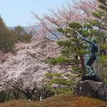 茅野スポーツ公園桜 (2)