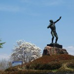 茅野スポーツ公園桜 (52)