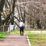 茅野スポーツ公園桜 (37)