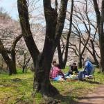 茅野スポーツ公園桜 (11)