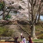 茅野スポーツ公園桜 (32)