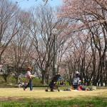 茅野スポーツ公園桜 (30)