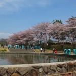 茅野スポーツ公園桜 (19)