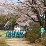 茅野スポーツ公園桜 (10)