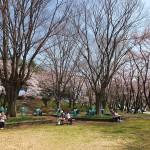 茅野スポーツ公園桜 (17)