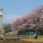 茅野スポーツ公園桜 (15)