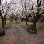 聖光時桜 (63)