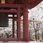 聖光時桜 (49)