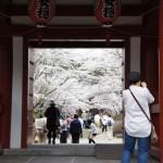 聖光時桜 (11)