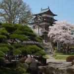 高島城桜2 115