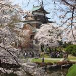 高島城桜2 211
