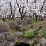 聖光時桜 (21)