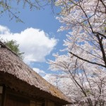 聖光時桜 (72)