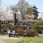 高島城桜2 106