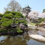 高島城桜2 114