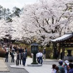 聖光時桜 (55)