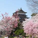 高島城桜2 145