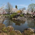 高島城桜2 174