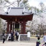 聖光時桜 (60)