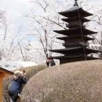 聖光時桜 (103)