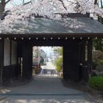高島城桜2 175