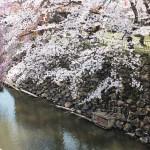 高島城桜2 090