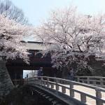 高島城桜2 222