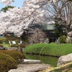 高島城桜2 108