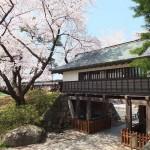 高島城桜2 154